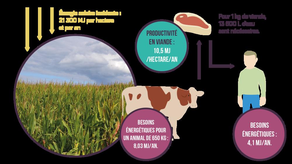 Comparaison entre deux agrosystèmes sciences première