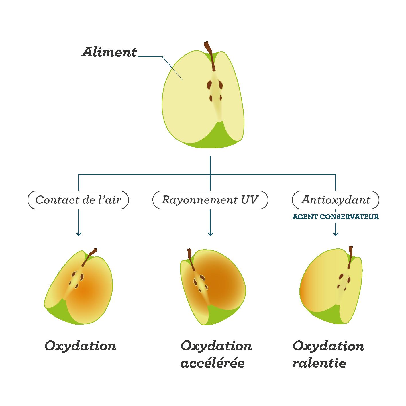 L'oxydation des aliments sciences première