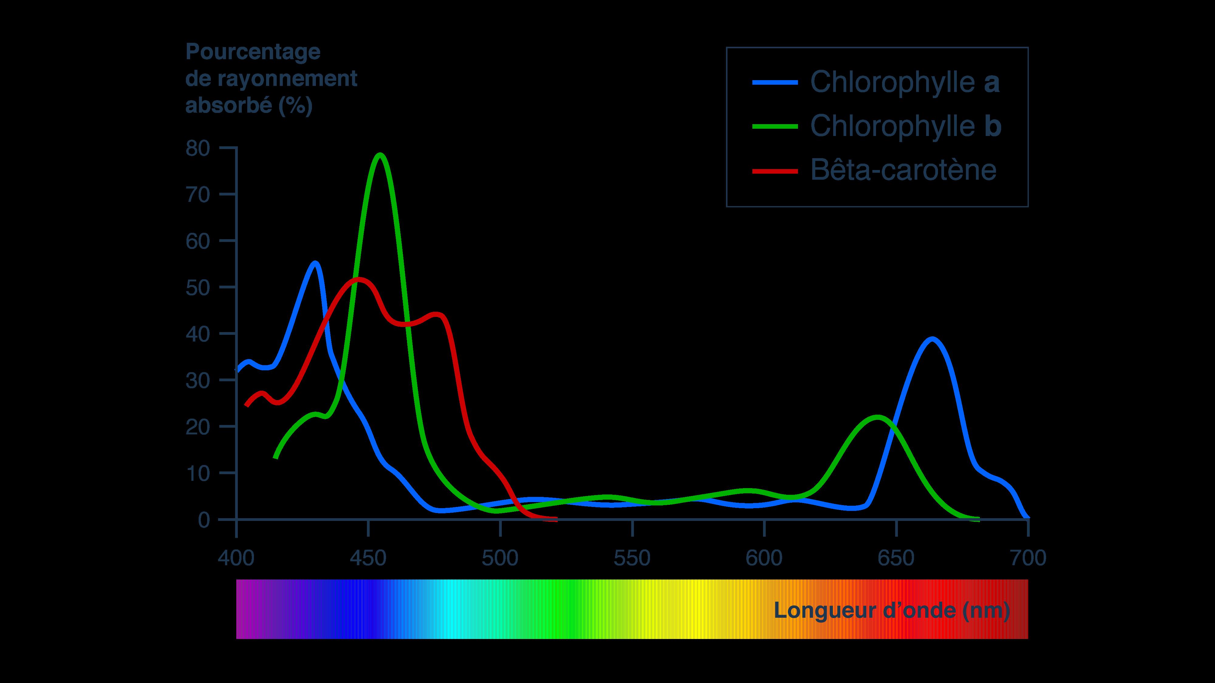 Spectre d'absorption de la lumière et des différents pigments