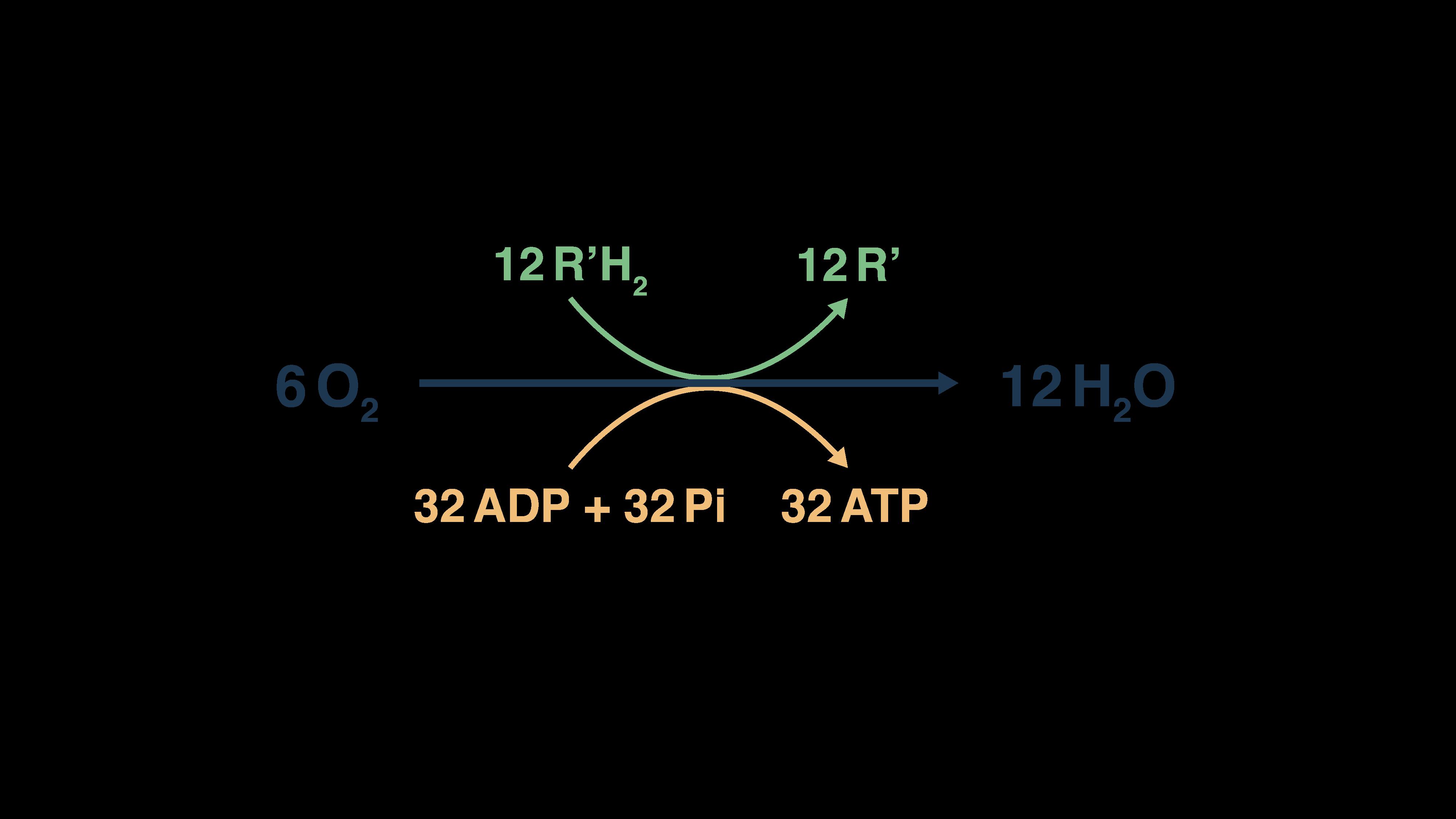 Formule de réoxydation