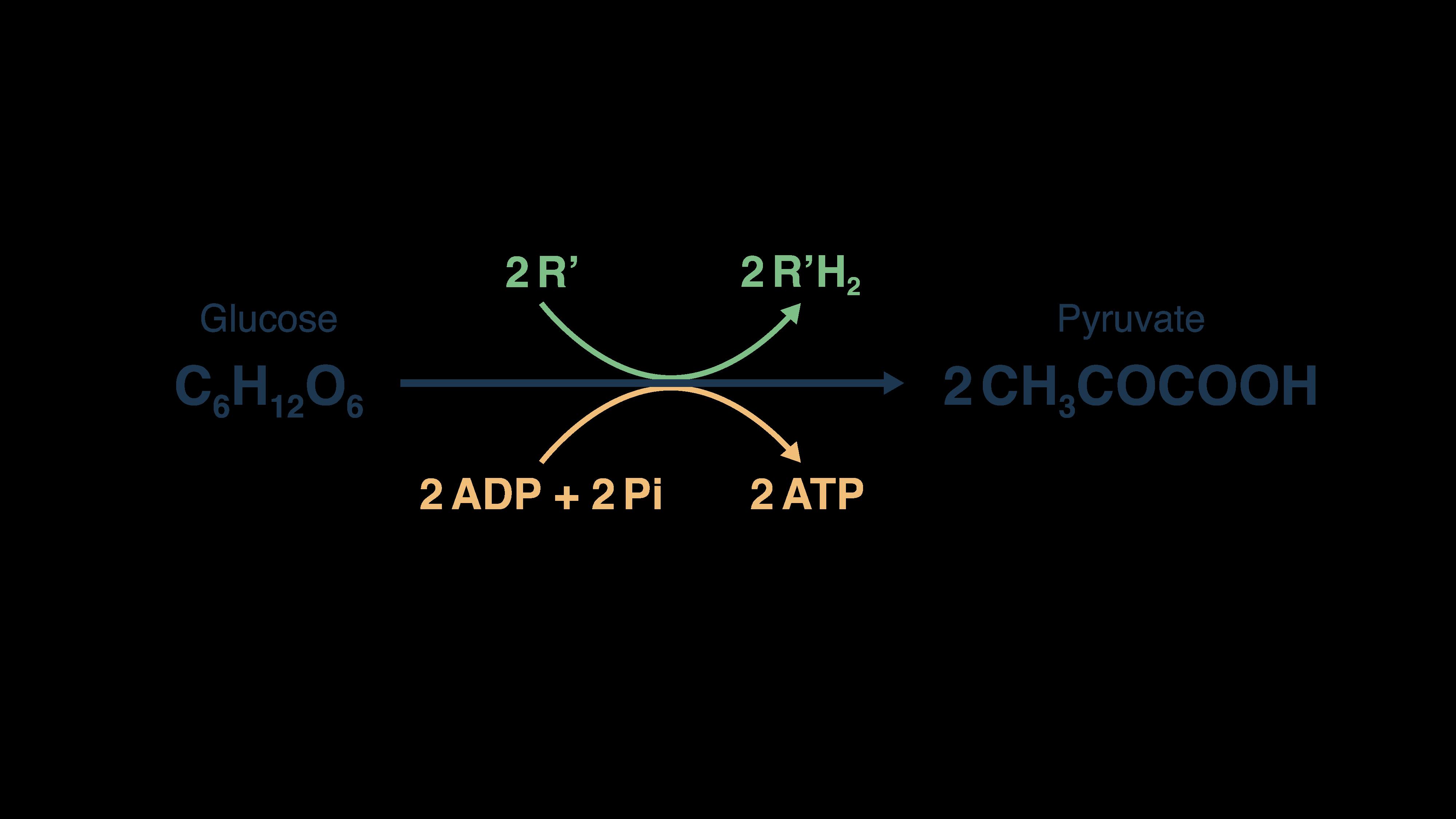 Formule de la glycolyse