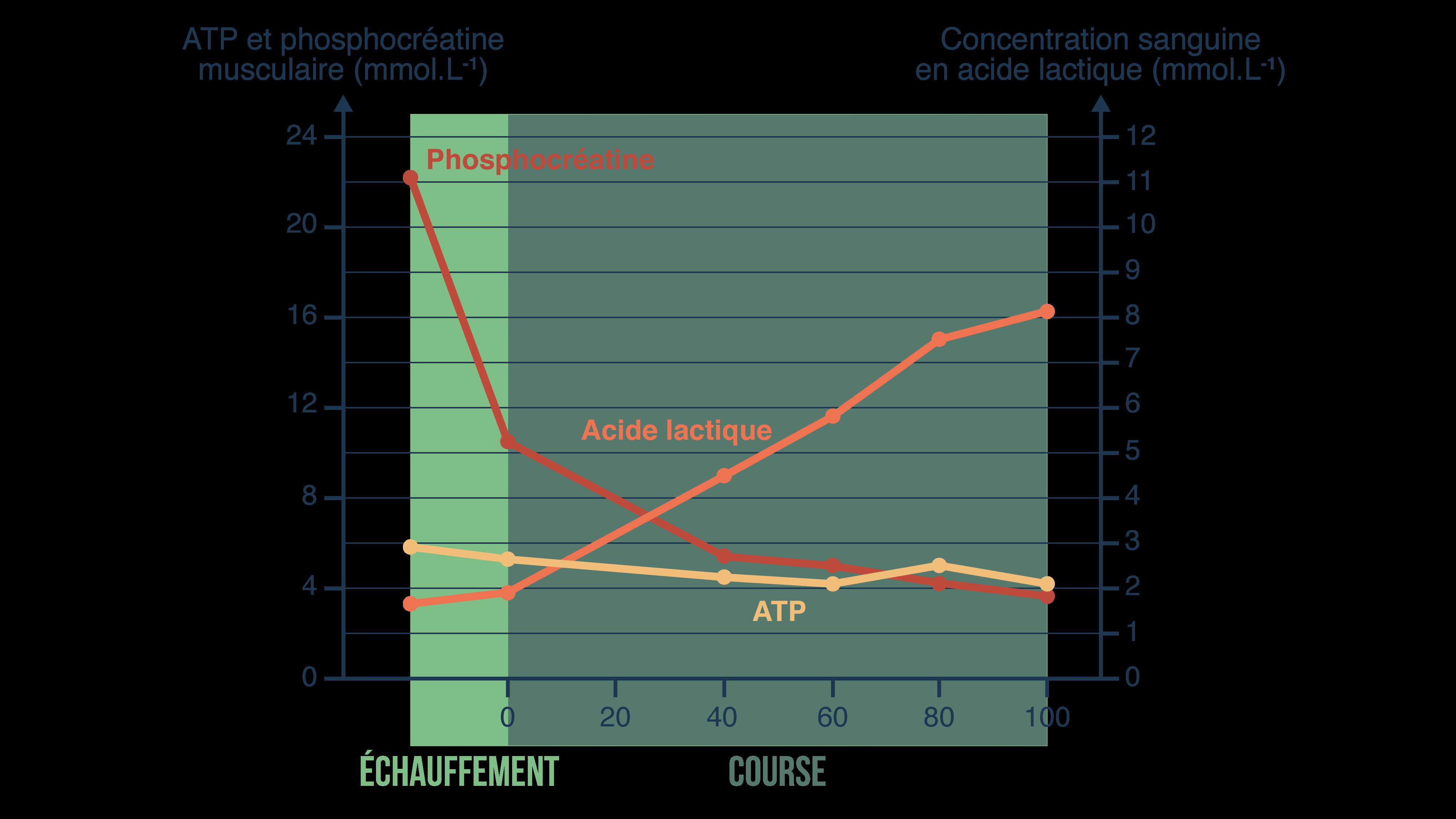 Evolution des paramètres sanguins au cours d'un sprint