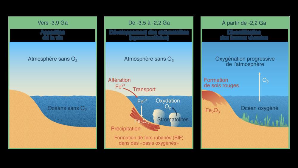 Développement de la vie et transformation de l'atmosphère