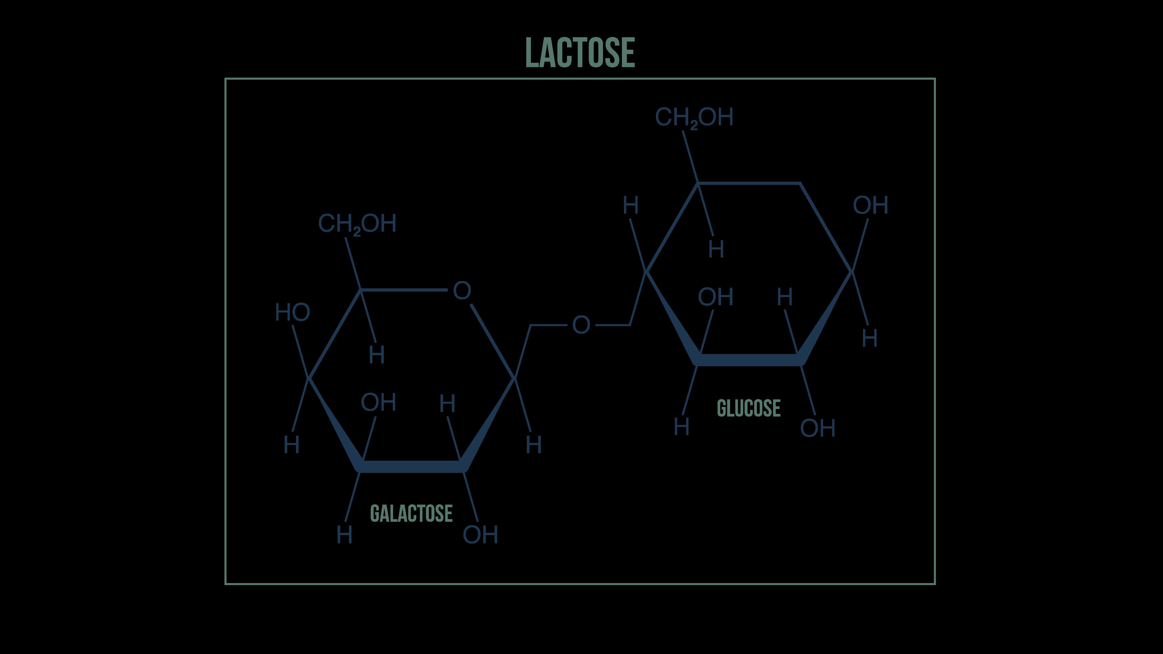 Assemblage des molécules du lactose