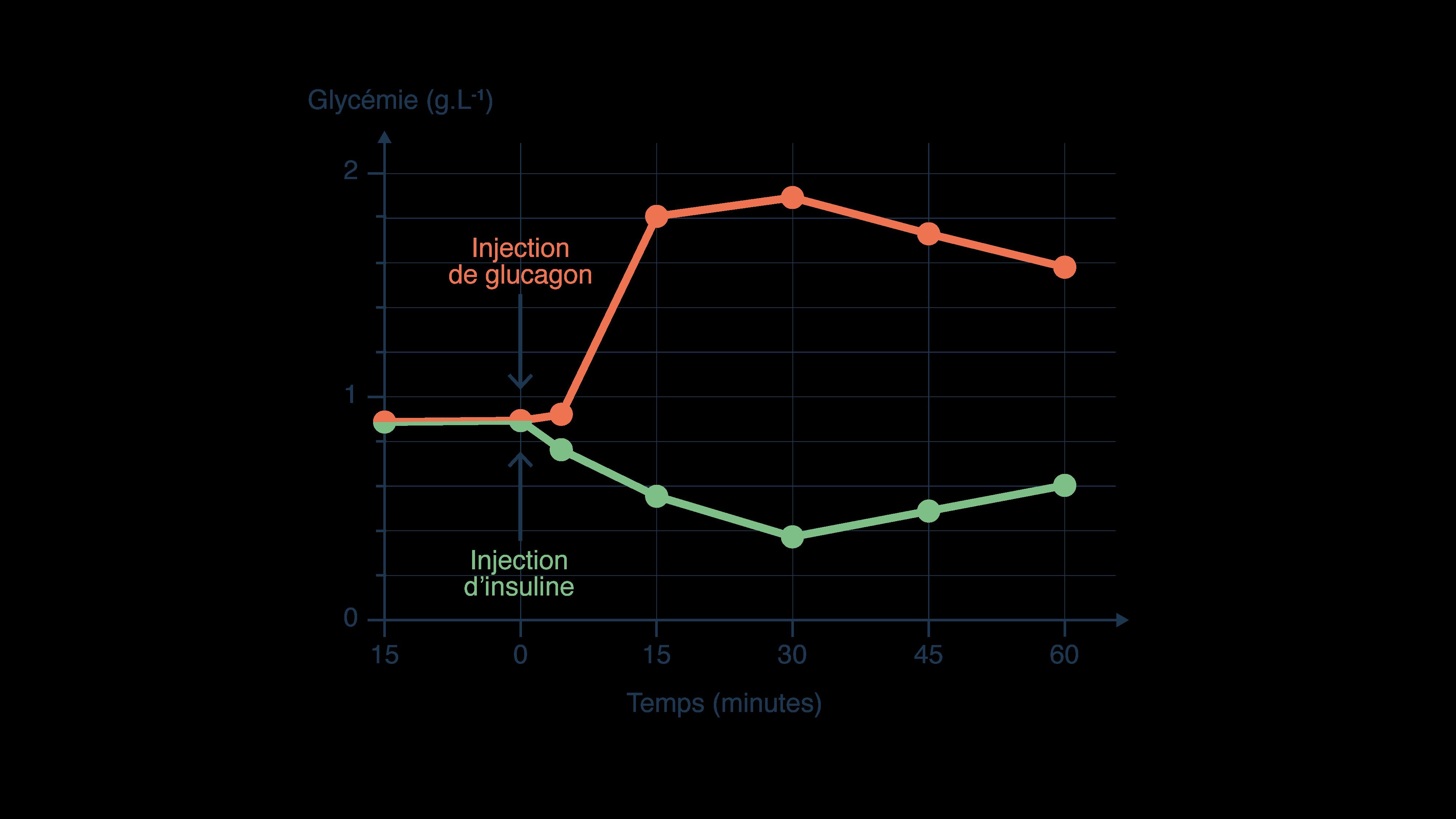 Évolution de la glycémie en fonction du temps