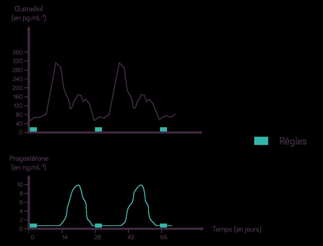 Concentration du sang en deux hormones ovariennes: l'œstradiol ou œstrogène et la progestérone en fonction du cycle sexuel
