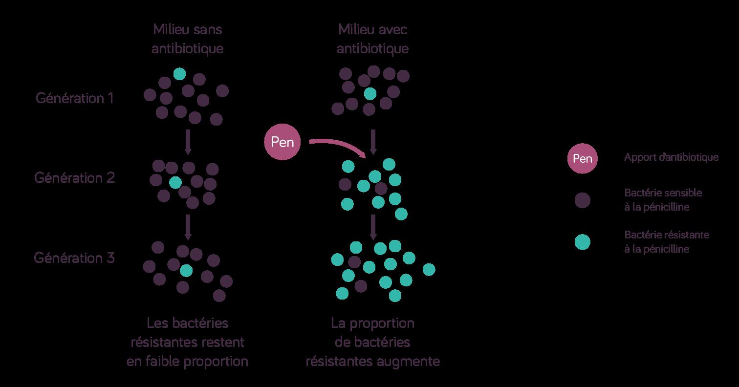Étude d'une population de bactéries dans un milieu avec antibiotiques et un milieu sans antibiotiques
