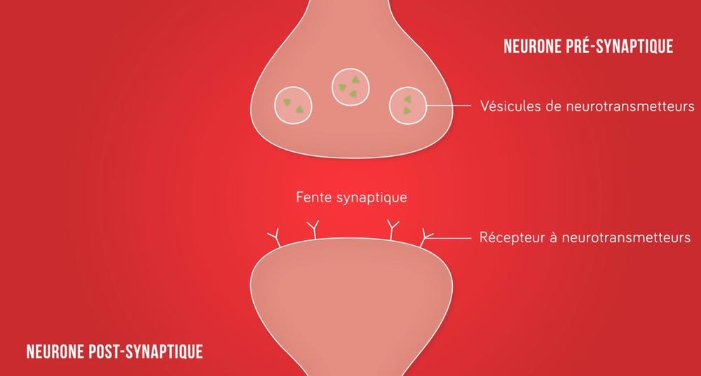 Schéma de deux synapses au repos