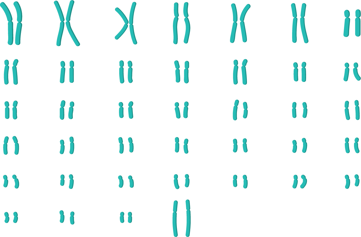 Caryotype animal-svt-terminale-s